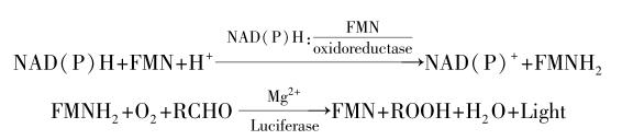 光,反应方程式