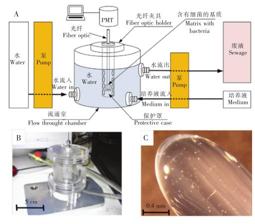 优化后的水体污染物毒性检测传感器