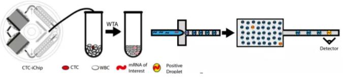 图1.微流控CTC-iChip系统筛查血液中的肝癌的工作原理。