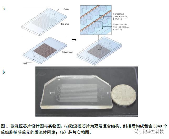 微流控芯片设计图与实物图
