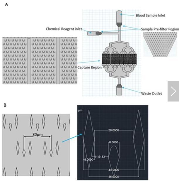 (A)微流控芯片的总体布局;(B)微柱的详细尺寸