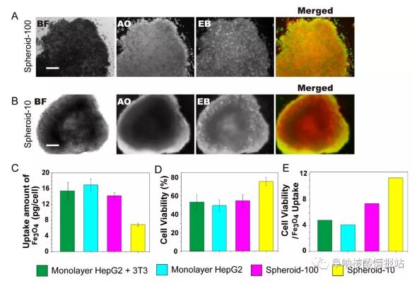 林金明, David A. Weitz:核壳支架中异型细胞的受控组装:液滴中的器官