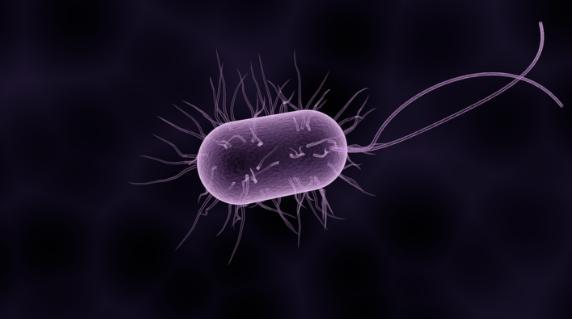 研究发现物理力会影响细菌的毒素抵抗力