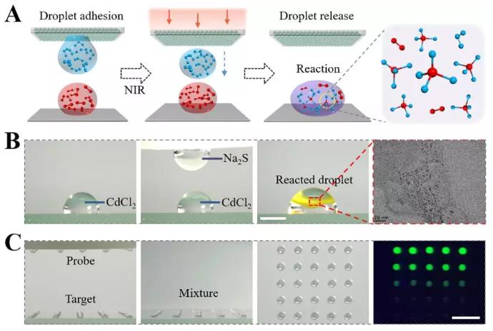 图3 可编程浸润性阵列通过可控释放的液滴构建微反应器进行化学合成以及生物检测