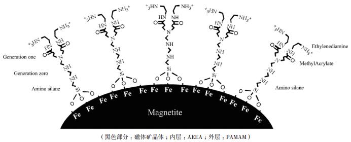 图 4 重构磁小体的结构[56]