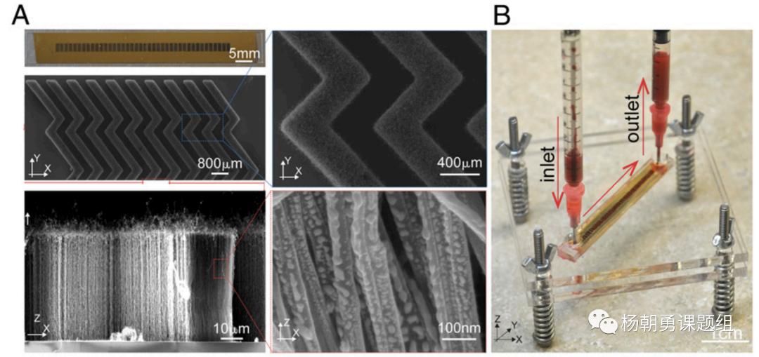 图1 VIRRION平台内部具有精准可控的碳纳米管阵列结构,用于通过尺寸捕获样品中的病毒。毫米级的芯片通道可以保证在处理样品时具有足够的通量