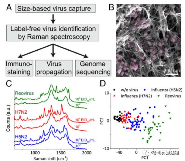 图4三种病毒建立拉曼数据库及病毒聚类分析