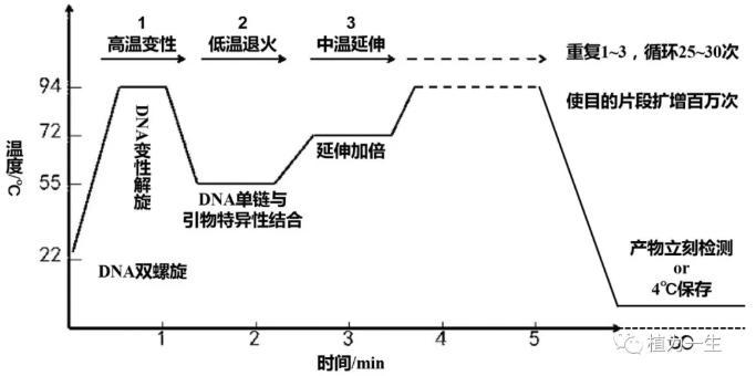 目的基因的扩增:PCR原理与过程