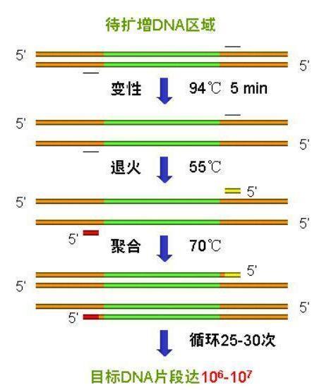 常用PCR仪用途及介绍