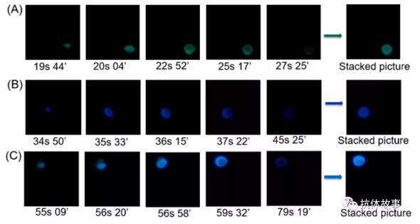 图1 检测视频不同时间典型截图的叠加图像,图像分别对应检测区域1(A)、2(B)、3(C)产生的光发射