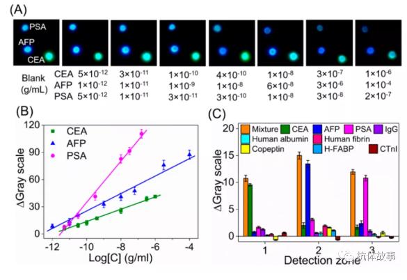 图3 (A)检测不同浓度CEA、AFP和PSA时的照片。(B)采用照片检测模式进行CEA、AFP和PSA检测的典型校准曲线。(C) CL免疫测定的干扰研究,分别设置十个干扰组。