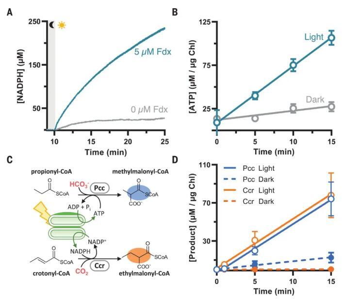 图1. 光催化辅酶产生