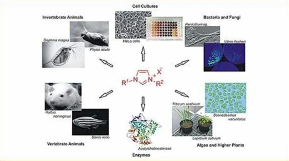 离子液体技术
