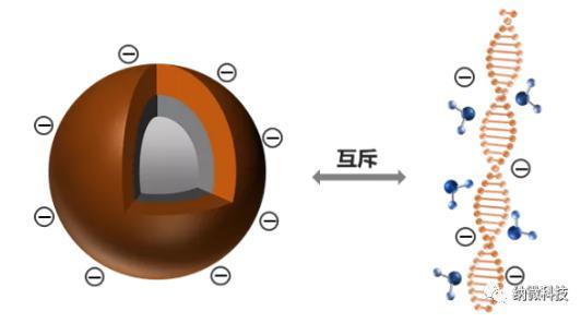 磁珠如何与核酸结合,实现提取功能?