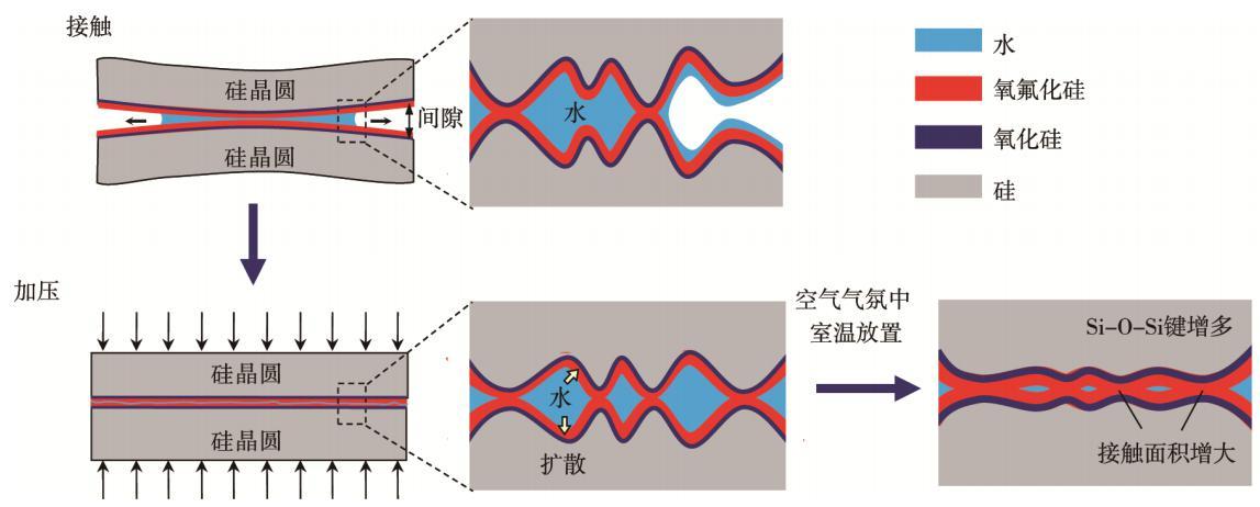 图7 含氟等离子体活化室温键合机理示意图