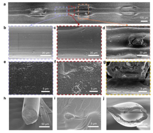 微流控沙漏型微纤维形态