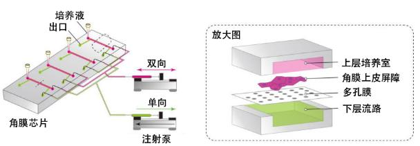 """图3:此次研究开发的""""角膜芯片""""概念图"""