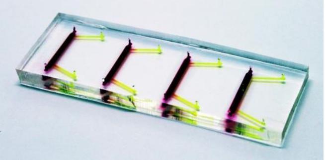 图4:角膜芯片