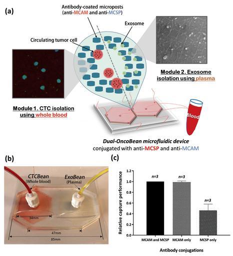 通过双重利用OncoBean(DUO)微流控设备双重隔离循环肿瘤细胞(CTC)和癌症外泌体