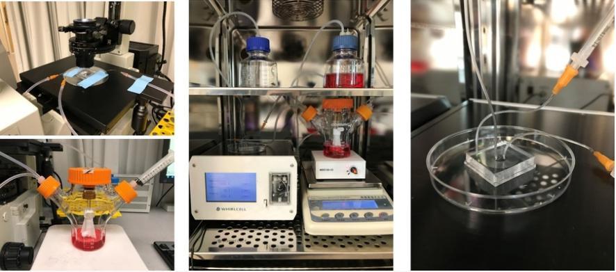 SMART研究人员开发出快速有效的方法来生产红细胞