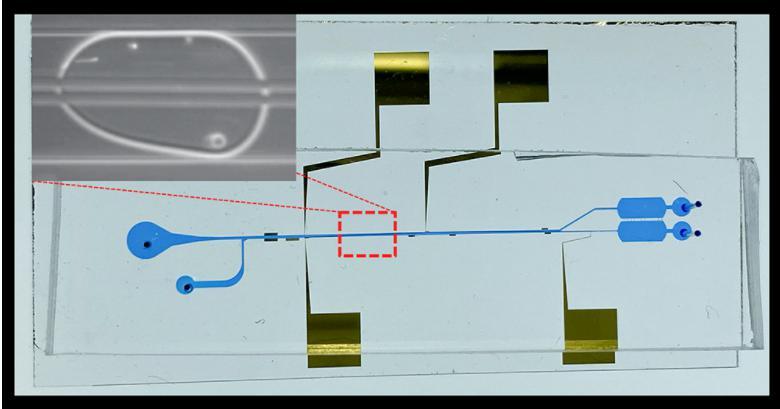 液滴内细胞分离微流控芯片的图像,显示了微流控通道和电极。放大图显示了宿主细胞和病原菌细胞在单个油包水微滴中分离到顶部和底部