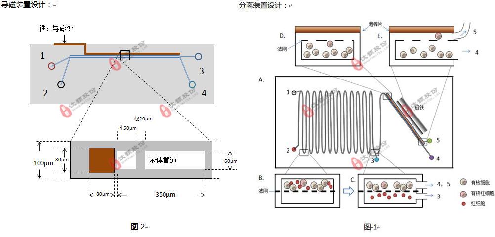 基于微流控平台的有核红细胞分析系统委托开发