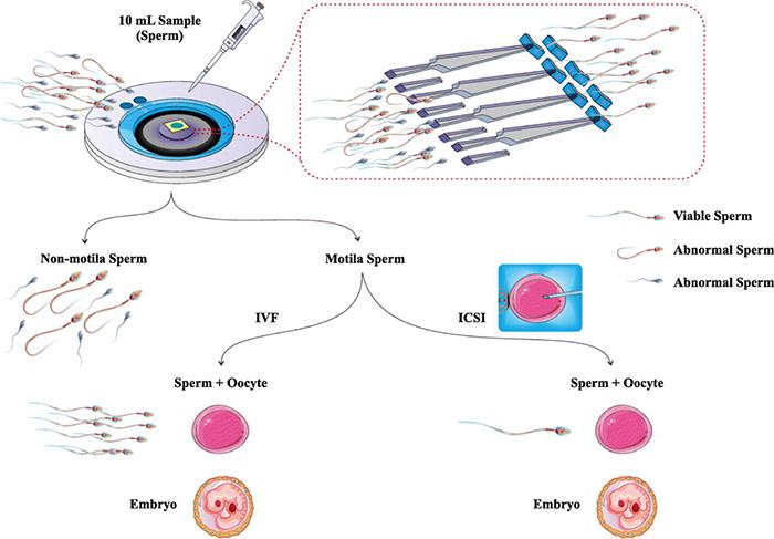 生殖生物学中的微流控技术进展