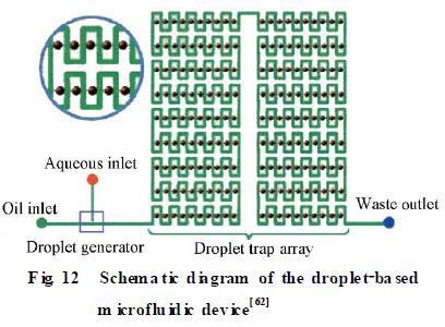 微流控芯片在模式生物水平化学研究技术