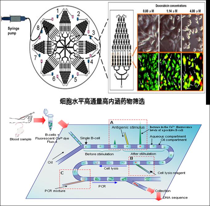 微流控生物芯片在疾病诊断和药物研究的应用