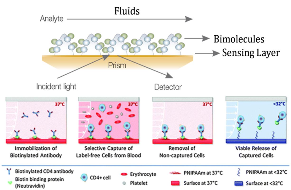生物芯片 - 生物分子间相互作用