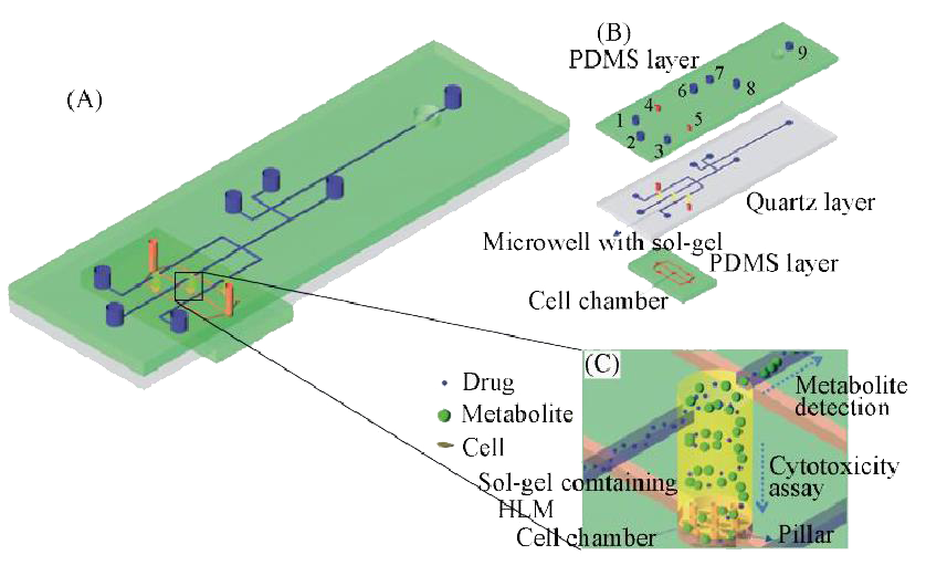 微流控芯片在分子细胞水平化学研究